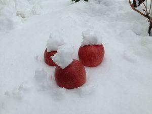 雪とりんご