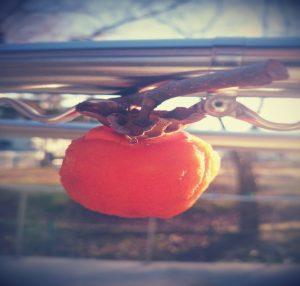 甘い干し柿完成